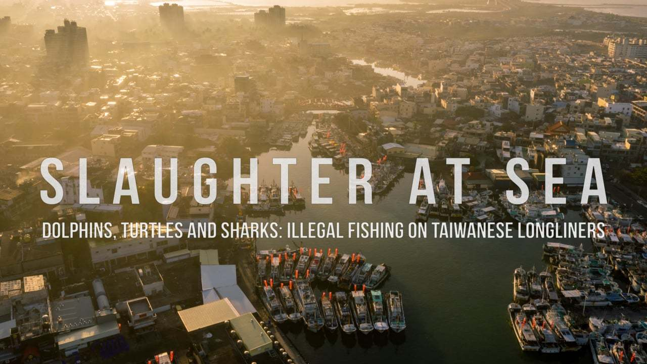 Slaughter at Sea