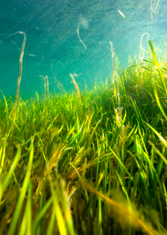 Open letter to world leaders: Put marine ecosystems at the heart of climate policy